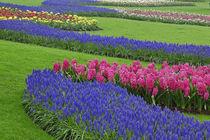 Netherlands by Danita Delimont