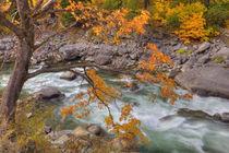 In Tumwater Canyon von Danita Delimont