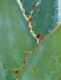 Arizona von Danita Delimont
