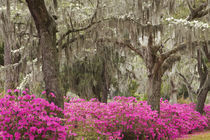 Spring at Historic Bonaventure Cemetery by Danita Delimont