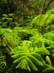 Lush tropical greenery in Hawaii Volcanoes National Park by Danita Delimont
