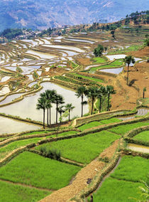 Rice terraces near Jiayin Village by Danita Delimont