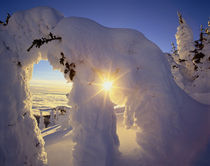 Sunset thru the Snowghosts at Big Mountain near Whitefish Montana by Danita Delimont
