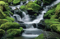 Stream with mossy rocks by Danita Delimont