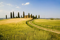 Tuscan Villa nearing Harvest by Danita Delimont