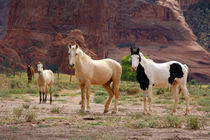 Navajo horses run free on the canyon floor von Danita Delimont