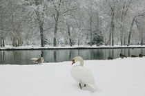 VIZILLE: Chateau de Vizille Park after winter storm Swan Lake by Danita Delimont
