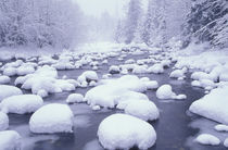 Fresh snow along Denny Creek by Danita Delimont