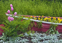 Wooden boat used as flower planter in garden von Danita Delimont