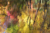 USA Smoky Mountain NP Tennessee refections of fall foliage in creek von Danita Delimont