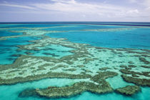 Aerial of the Great Barrier Reef by the Whitsunday Coast von Danita Delimont