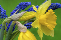 Detail of daffodil and hyacinth flowers von Danita Delimont