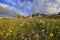 Prairie Wildflowers at Windy Creek in the Many Glacier Valley of Glacier National Park in Montana by Danita Delimont