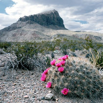 Situated in the north tip of the Chihuahuan Desert von Danita Delimont