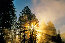 God Rays from morning fog along the Madison river in Yellowstone National Park von Danita Delimont