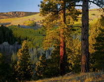 Dixie National Forest by Danita Delimont