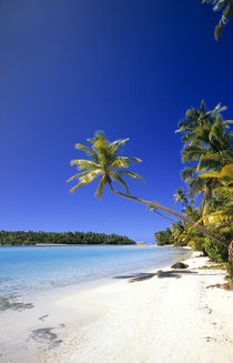 Palm lined beach Cook Islands by Danita Delimont