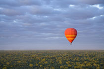 Dawn launch hotair baloon ride around Alice Springs by Danita Delimont