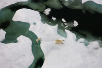 Alaska von Danita Delimont