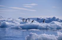 Antarctic Peninsula by Danita Delimont