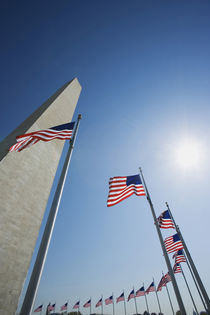 American flags surround the Washington Monument by Danita Delimont