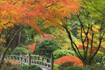 Wooden bridge and maple trees in autumn color at Portland Japanese Garden von Danita Delimont