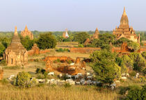 Cows pass by some Bagan temples by Danita Delimont