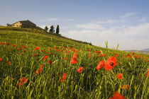 Tuscan Villa in Spring With Poppies von Danita Delimont