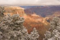 Arizona by Danita Delimont