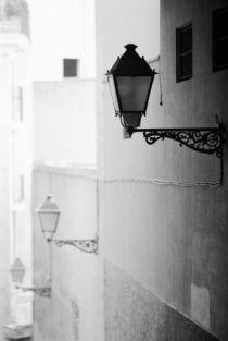 Palma von Danita Delimont