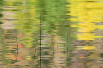 Reflections in water with reeds by Danita Delimont