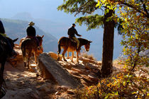 Mule ride into Bright Angel Canyon von Danita Delimont
