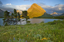 Wildflowers along Swiftcurrent Lake in the Many Glacier Valley of Glacier National Park in Montana von Danita Delimont