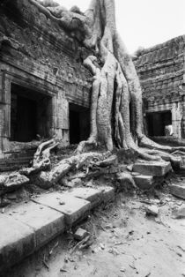Ta Prohm Tree by Danita Delimont