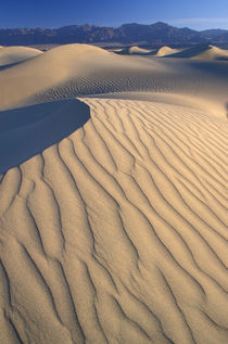 Mesquite Flats sand dunes with wind ripples at sunrise by Danita Delimont