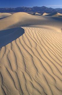 Mesquite Flats sand dunes with wind ripples at sunrise von Danita Delimont
