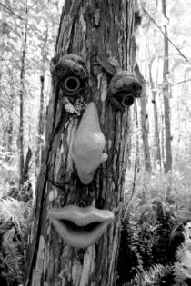 Tree troll on a Big Cypress tree von Danita Delimont
