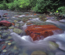 Tuchuck Creek in the Flathead National Forest of Montana by Danita Delimont
