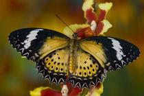 Wings open on orchid von Danita Delimont
