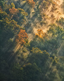 Sunrise lights fog-covered forest by Danita Delimont