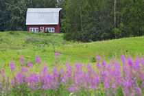 Barn in field with fireweed by Danita Delimont