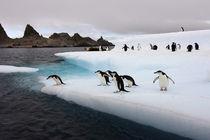 Southern Ocean von Danita Delimont