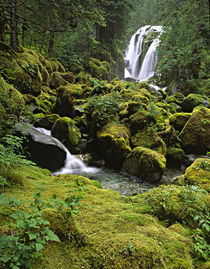 A waterfall and rain forest in Southeast Alaska von Danita Delimont