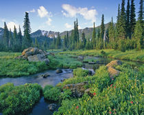 Picnic Creek in the Jewel Basin of the Swan mountain Range in Montana von Danita Delimont
