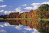 Reflection of autumn foliage and clouds in pond von Danita Delimont