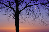A sliver of moon singular tree silhouette by Danita Delimont