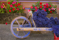 Old wooden cart with fresh-cut lavender by Danita Delimont