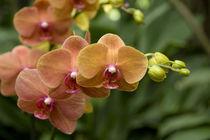 National Orchid Garden located within the Botanic Gardens von Danita Delimont