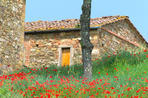 Abandoned villa in old vineyard with red poppies by Danita Delimont