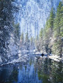 Snow covered trees along Merced River by Danita Delimont